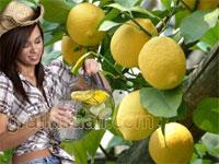 Kendinizle kavgan�z varsa - Hayat bir limon a�ac�d�r ona tad�n� siz katacaks�n�z