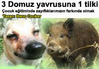 �ocuk e�itiminde zay�fl�klar�m�z� bilmenin �nemi - 3 k���k domuzcuk ve 1 tilki - Annelik Yazan: Banu Conker